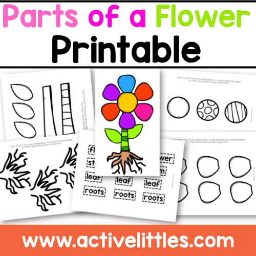 Parts of a flower printable for Kids- Active Littles