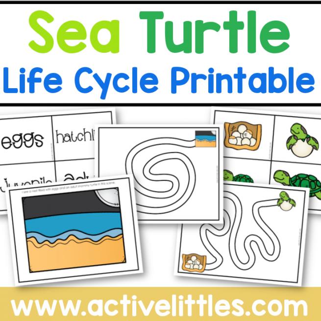 Sea Turtle Life Cycle Printable for Kids