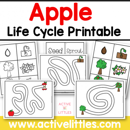 apple life cycle printable preschool